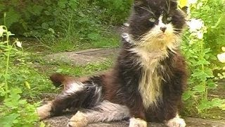 Download 'Henry' the stray cat who lives in my parents shed. Video