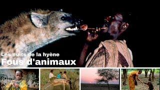 Download Les nuits de la hyène - Ethiopie - Harar - Le gamfo - Fous d'animaux Video