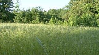 Download Bedding Cover For Deer and Turkeys - Native Grasses Video