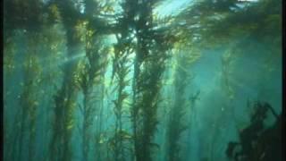 Download Dive the Giant Kelp Forest, Tasmania, Australia Video