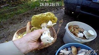 Download Chyba największy wysyp grzybów tego roku Video