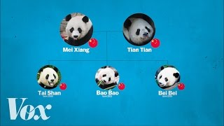 Download China's panda diplomacy, explained Video