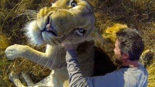 Download GoPro: Lion Hug Video