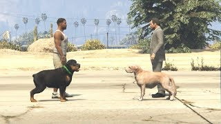 Download أخطر تحدي بين كلب مايكل و كلب فرانكلين في قراند 5؟ GTA V CHOP VS MICHAEL DOG Video