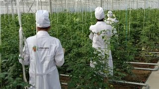 Download Таджикистан ждет богатый урожай овощей и фруктов даже зимой Video