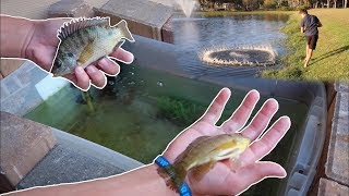 Download RESTOCKING HOMEMADE LIVE BAIT WELL... *FISH FEED* Video
