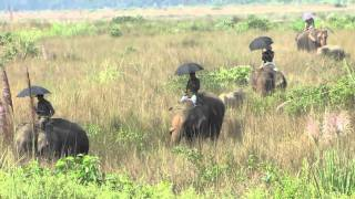 Download Chitwan National Park and Sapana Lodge, Nepal Video