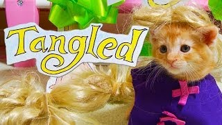 Download Disney's Tangled (Cute Kitten Version) Video