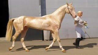 Download 7 Kuda Paling Unik Yang Ternyata Ada Di Dunia !!! Bagus Bangat Video
