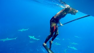 Download Diving with just short of a Billion MAN EATING SHARKS (Sailing La Vagabonde) Ep. 53 Video