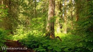 Download Earth Elemental Healing (432Hz) Music ~ Grounding, Growth, Prosperity, Strength Video