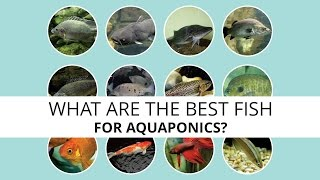 Download What are the best fish for Aquaponics? Video