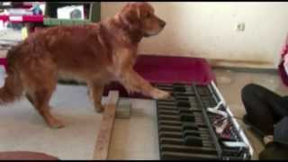 Download TOP 10 MOST AMAZING DOGS Video