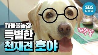 Download SBS [동물농장] - 상상 초월 특별한 천재견 호야 Video