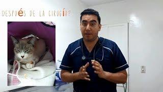 Download Esterilización en gatas Video