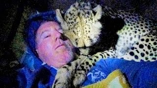 Download Night 4: Sleeping Inside A Cheetah Enclosure With Two Adult Big Cats - Cat Sleep Dreams Hunts Bye Video