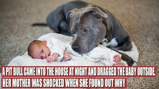 Download A Pit Bull Saved a Baby, but the Way It Did It Shocked the Mother Video