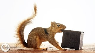 Download Watch These Frustrated Squirrels Go Nuts! | Deep Look Video