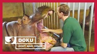Download Anti-Babypille für Nilpferde | Experience - Die Reportage | kabel eins Doku Video