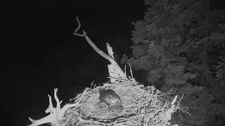 Download Audubon Osprey Nest Cam 06-17-2018 20:38:28 - 21:38:29 Video