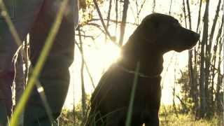 Download 2012 AKC Master National Hunt Test Video
