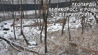 Download ЛЕОПАРДЫ ВЕЛИКОРОСС И РОНА 27 ФЕВРАЛЯ 2018 Г. Video