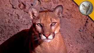 Download A Day at the Arizona Sonora Desert Museum! Video