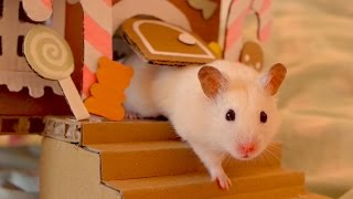 Download 🍬 Hamster in a Gingerbread House 🍭 Video