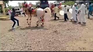 Download Horse Dancing Gujarati and Hindi Song Dance Funny Video Video