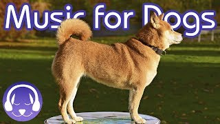 Download Soothing Classical Music for Dogs - Relax Your Dog with 15 Hours of Lullabies! Video