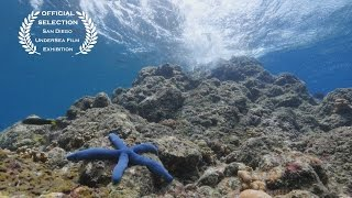 Download Living Colour - Underwater 4K Video Video