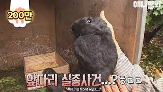 Download 멀쩡하던 토끼 다리가 사라졌다? Video