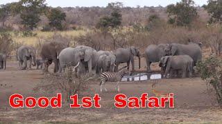 Download MadMongoose African Safari - Kruger National Park Video