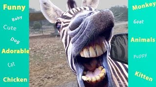 Download TRY NOT TO LAUGH BAD DAY WATCH THESE FUNNY ANIMALS! Video