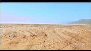Download Viral Video UK: Stunning drone footage captures safari in Tanzania! Video