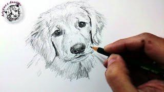 Download Técnicas y Tips de Dibujo con Lápiz de Grafito y Cómo Dibujar un Perro a Lápiz Video