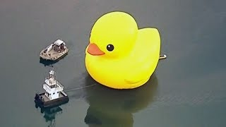 Download Taxpayers frustrated over cost of Toronto's big rubber duck Video
