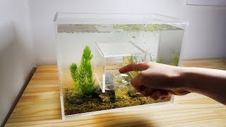 Download How to Make Hole in the Middle Acrylic Aquarium, Nano (Water Flea Tank) Video