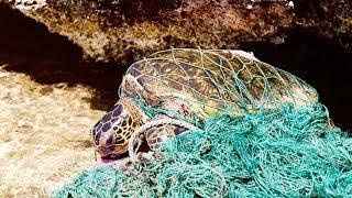 Download How ocean plastic threatens sea turtles Video