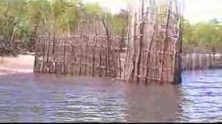 Download 198 Kenya Funzi traditional fishing trap. Edge of mangrove Video