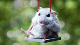 Download Cute Mouse Videos - Funny Mice Compilation NEW Video