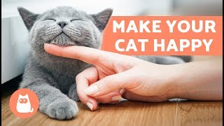 Download How to Make Your Cat Happy – 10 Tips for a Content Cat Video