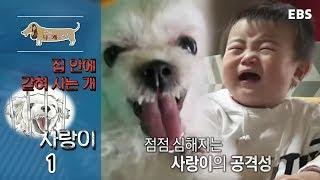 Download 세상에 나쁜 개는 없다 - 집 안에 갇혀 사는 개, 사랑이 #001 Video