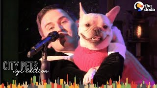 Download French Bulldog and Dad are NYC Broadway Stars | The Dodo City Pets Video