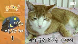 Download 고양이를 부탁해 - 크랜의 모두 잠든 후에 #001 Video