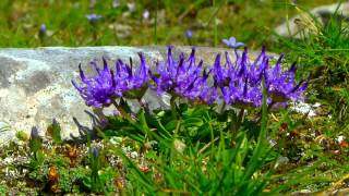 Download Nationalpark Hohe Tauern Video