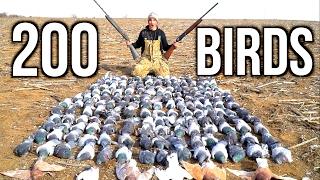 Download SHOOTING 200 Pigeons!!! Kansas Pigeon Hunting 2017 Video