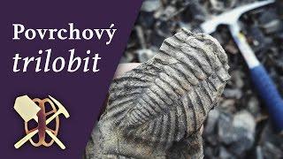 Download Trilobiti na Barrandově - Odontochile hausmani Video