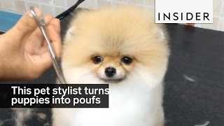 Download This Pet Stylist Turns Puppies Into Perfect Poufs Video