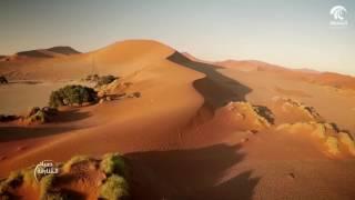 Download صباح الشارقة: النظام البيئي Video